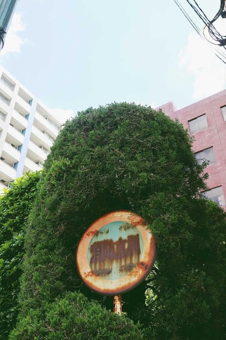 ローカルWEBメディア・地域サイト 草加ローカルストーリー 草加カメラ部 街の緑01