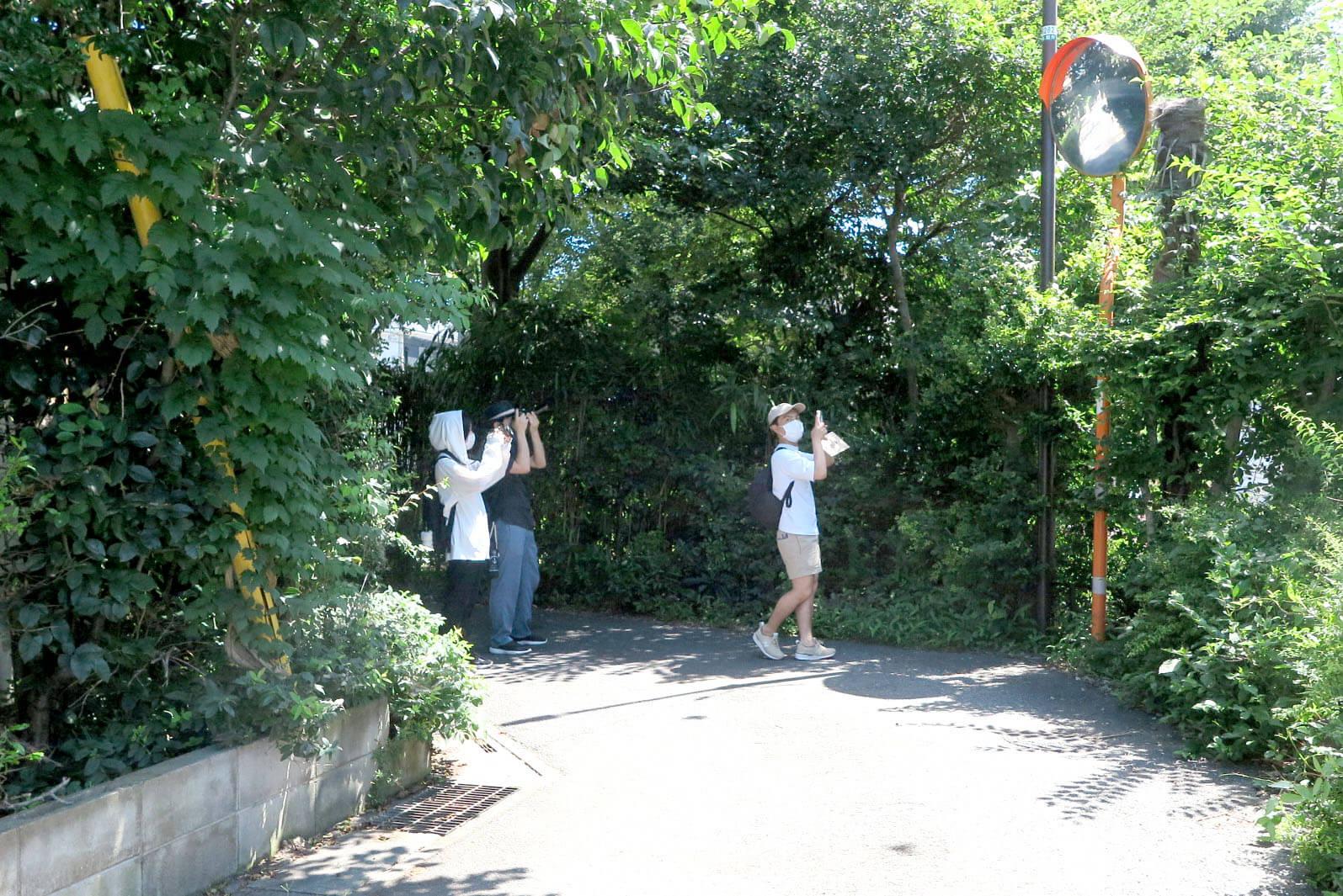 ローカルWEBメディア・地域サイト 草加ローカルストーリー 草加カメラ部 草加レポート 緑のトンネル