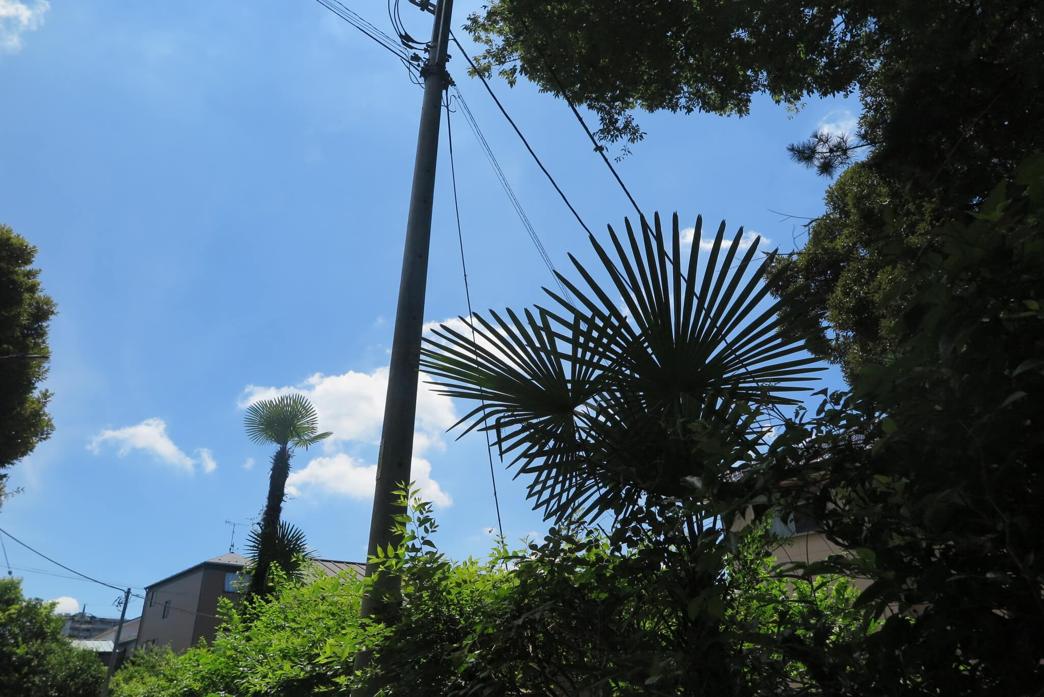 ローカルWEBメディア・地域サイト 草加ローカルストーリー 草加カメラ部 草加レポート 真夏の空